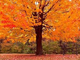 A tree with fall colors.